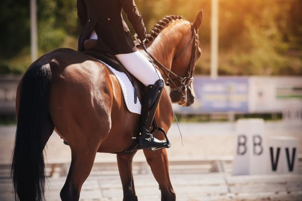 Dr. Kat's List: Five Colleges for Equestrians