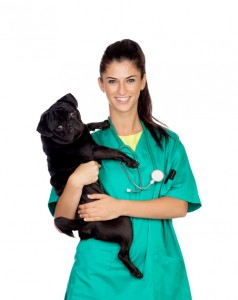 Dr. Kat's List: Five Colleges for Future Veterinarians