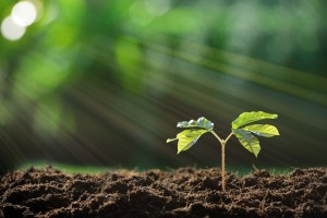 Freshmen: Plant the Seeds for College Prep Now