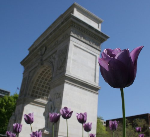 Dr. Kat's List: Five Colleges with Fun Spring Traditions